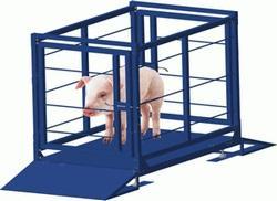 Ваги для зважування тварин, свиней, ВРХ